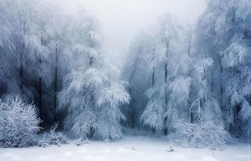 Winter, Foto
