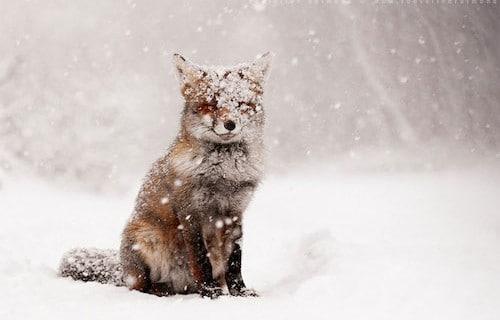 Tiere im Winter, Fotografie