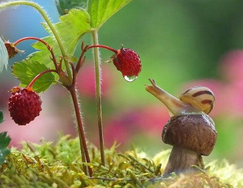Natur, Schnecken